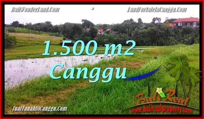 JUAL TANAH MURAH di CANGGU 1,500 m2 View sawah dekat ...